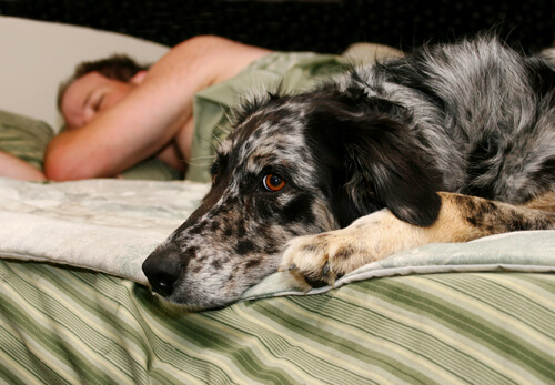 dormir-mejor-con-tu-perro