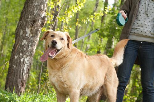 El paseo con tu perro