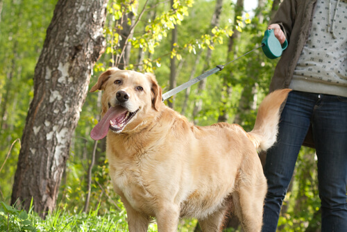 Ventajas e inconvenientes de la correa extensible para perros