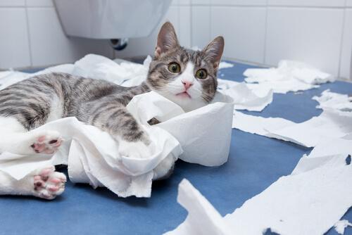 gato espalhando papel higienico