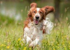 hacer-que-tu-perro-sea-feliz