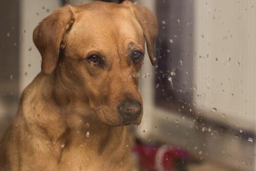 ¿Cómo influye el sonido de la lluvia en los perros?