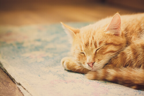 Los gatos duermen