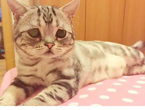 Te presentamos a Luhu, la gatita de cara triste