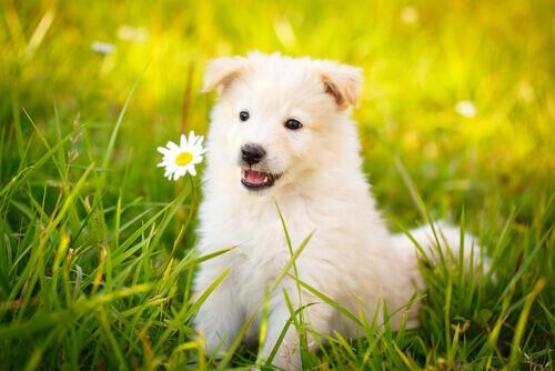 Las Mejores Frases Sobre Perros Que Te Encantarán Mis Animales