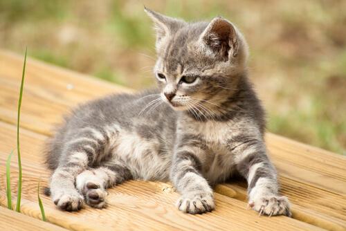 14 nombres creativos para tu gato