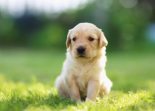 14 nombres creativos para tu perro
