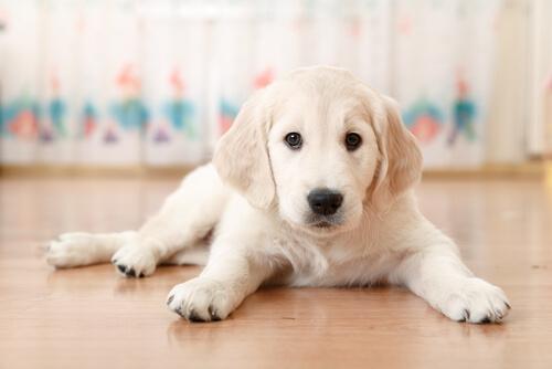 perro-nuevo-en-casa