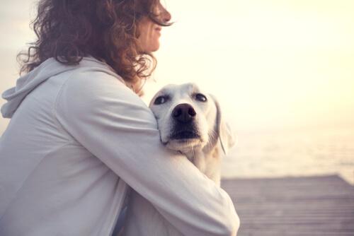 frases sobre cães