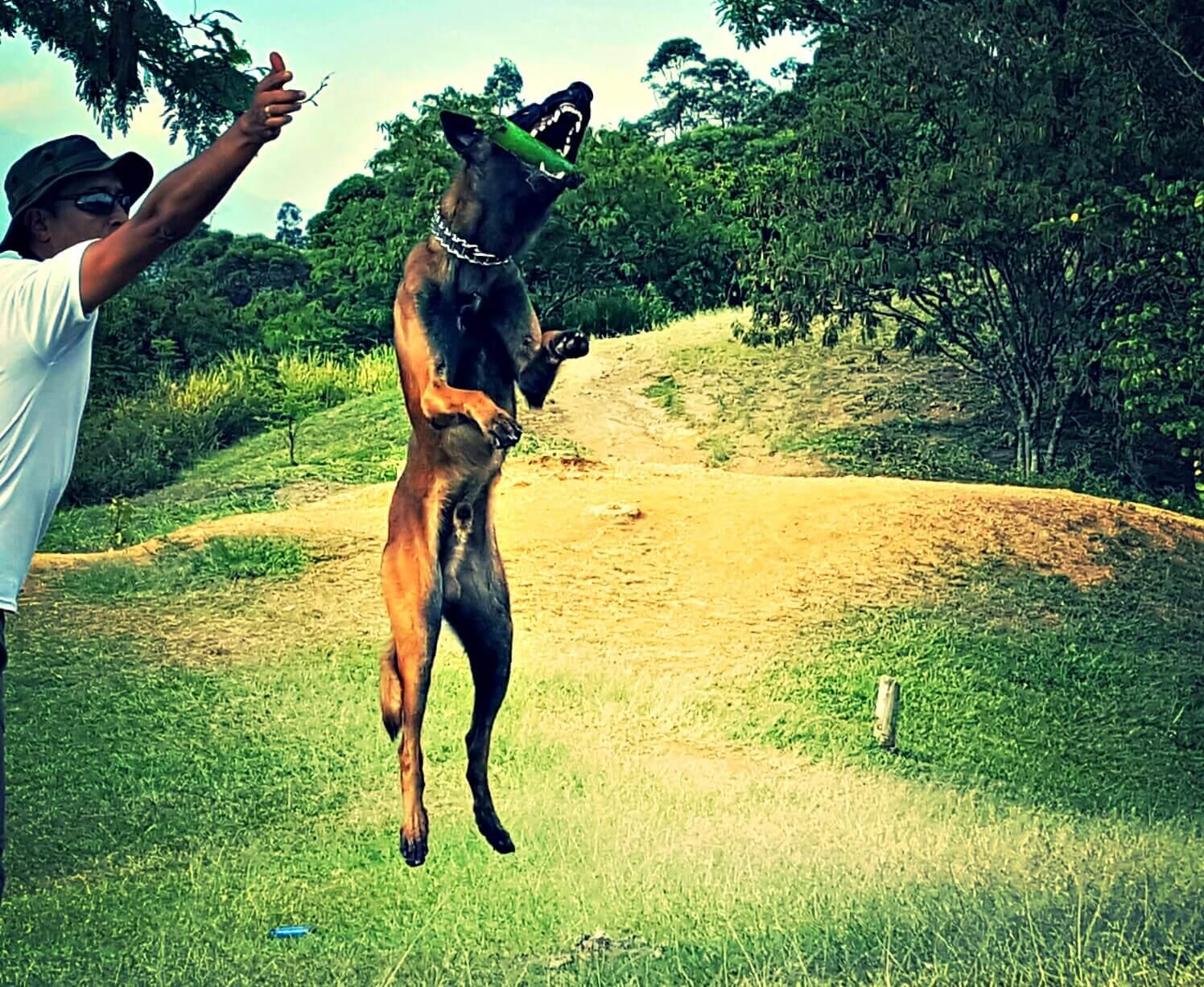 cachorro-busca-desaparecidos