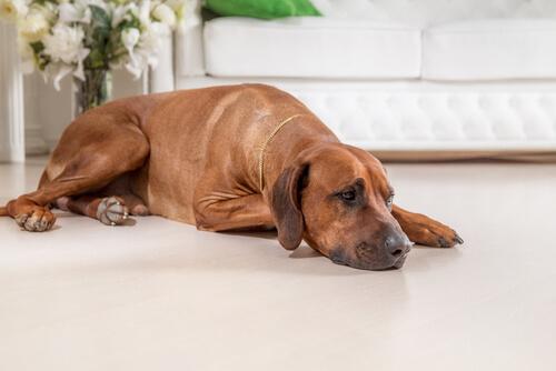 cachorro-e-o-pessimismo