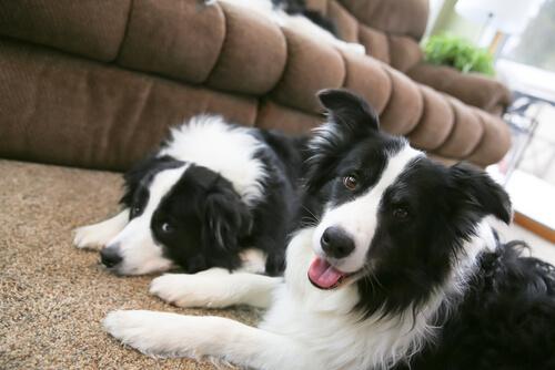 Cómo calmar la ansiedad por separación de tu perro