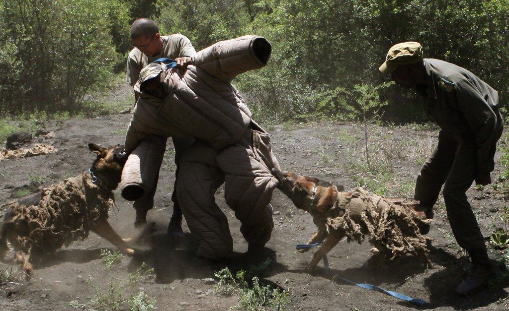 Los perros que combaten la cacería ilegal en África