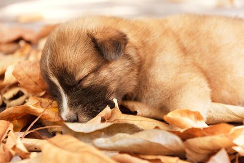 La personalidad de tu perro según su forma de dormir