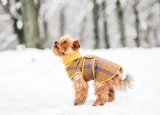 que-tu-perro-no-pase-frio