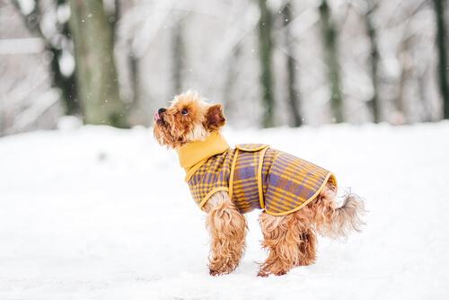 6ed0ae811756d 5 trucos para que tu perro no pase frío este invierno - Mis animales