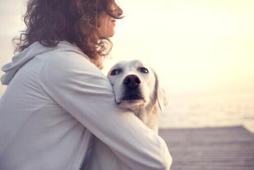 Refranes populares sobre perros