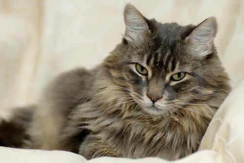 el pelo del gato