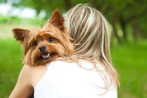 Cómo saber que tu perro te ama locamente