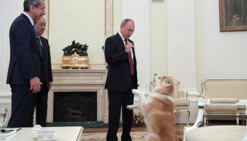 El perro de Vladimir Putin 'asusta' a los periodistas japoneses