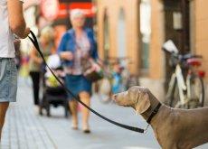app-para-que-paseen-a-tu-perro