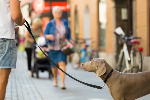 Descubre apps para que paseen a tu perro