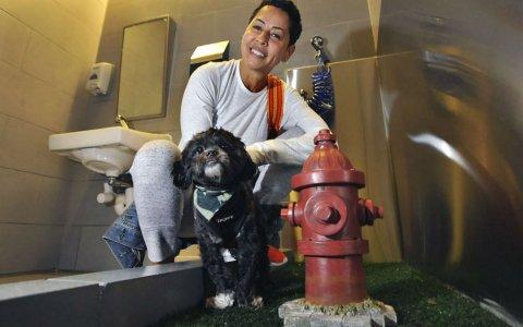 Ya existen los primeros baños para mascotas en los aeropuertos