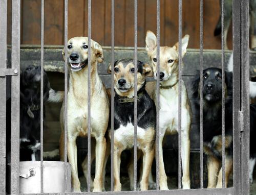 Corea del Sur cierra el mercado más grande de carne de perro