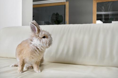 Conejo encima de un sofa