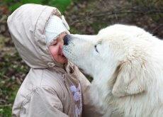 dejar-que-nuestro-perro-nos-bese-la-cara