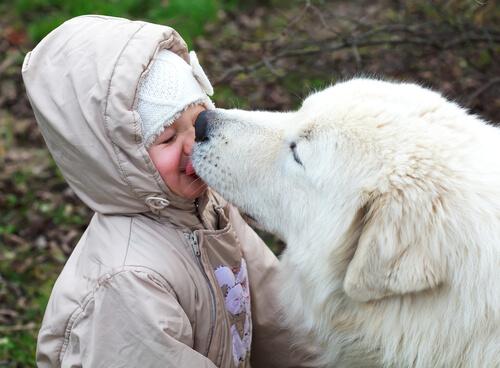 ¿Podemos dejar que nuestro perro nos bese en la cara?