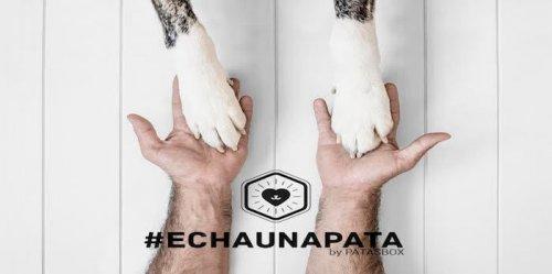 #Echaunapata, campaña en Instagram para mascotas abandonadas