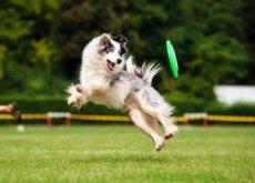 ejercicios-en-tu-perro