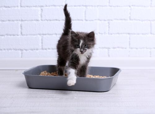 ¿Qué hago si mi gato hace todo fuera del arenero?