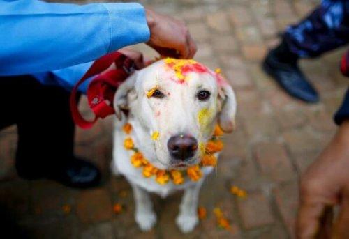 Descubre diez festividades para las mascotas por todo el mundo