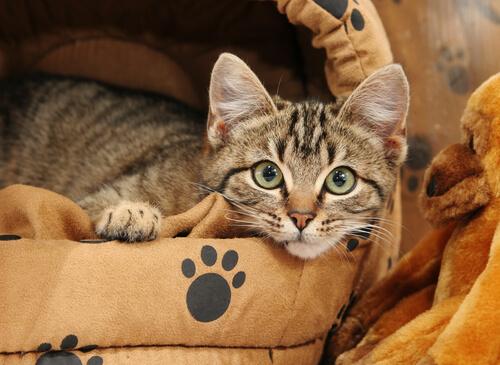 Cómo enseñar a tu gato a dormir en su cama