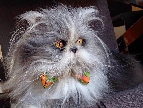 ¿Gato o perro? ¿Sabrás adivinar qué es esta criatura?