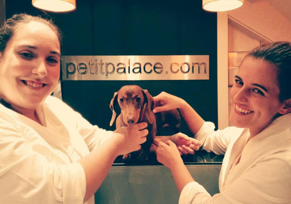 Hotel para perros y gatos