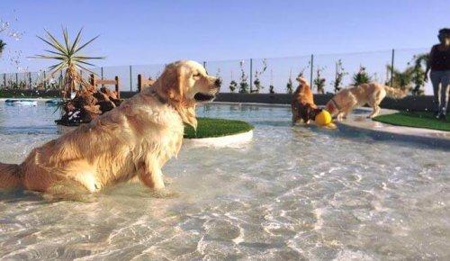 En Tenerife se abre el hotel para perros y gatos más lujoso de Europa