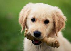huesos-para-perros