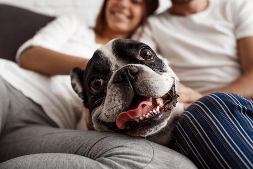 Tratar a los perros como humanos es una forma de maltrato
