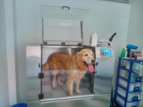 Cómo funcionan las máquinas de lavado para perros