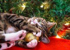 mascota-en-navidades
