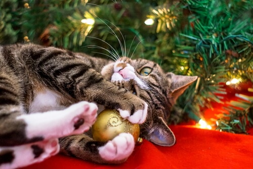 Mascota en navidades