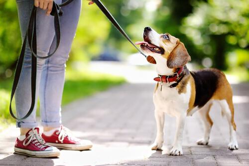 ¿Cómo puedo motivar a mi perro a aprender?
