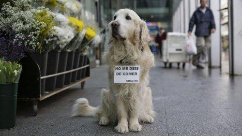 Ney, un perro al que siempre recordamos