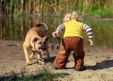 nino-miedo-a-los-perros