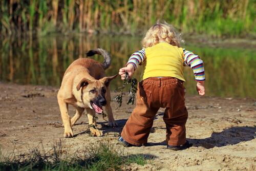 Qué hacer si tu hijo tiene miedo a los perros