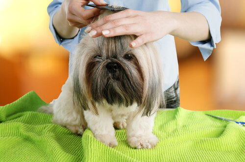 Cómo hacer una sesión de peluquería perfecta en casa