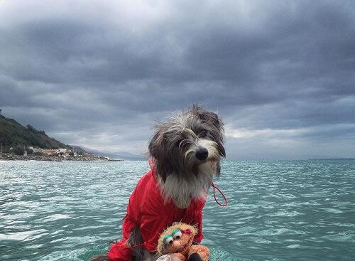 Conoce a Nirvana, la perrita marinera